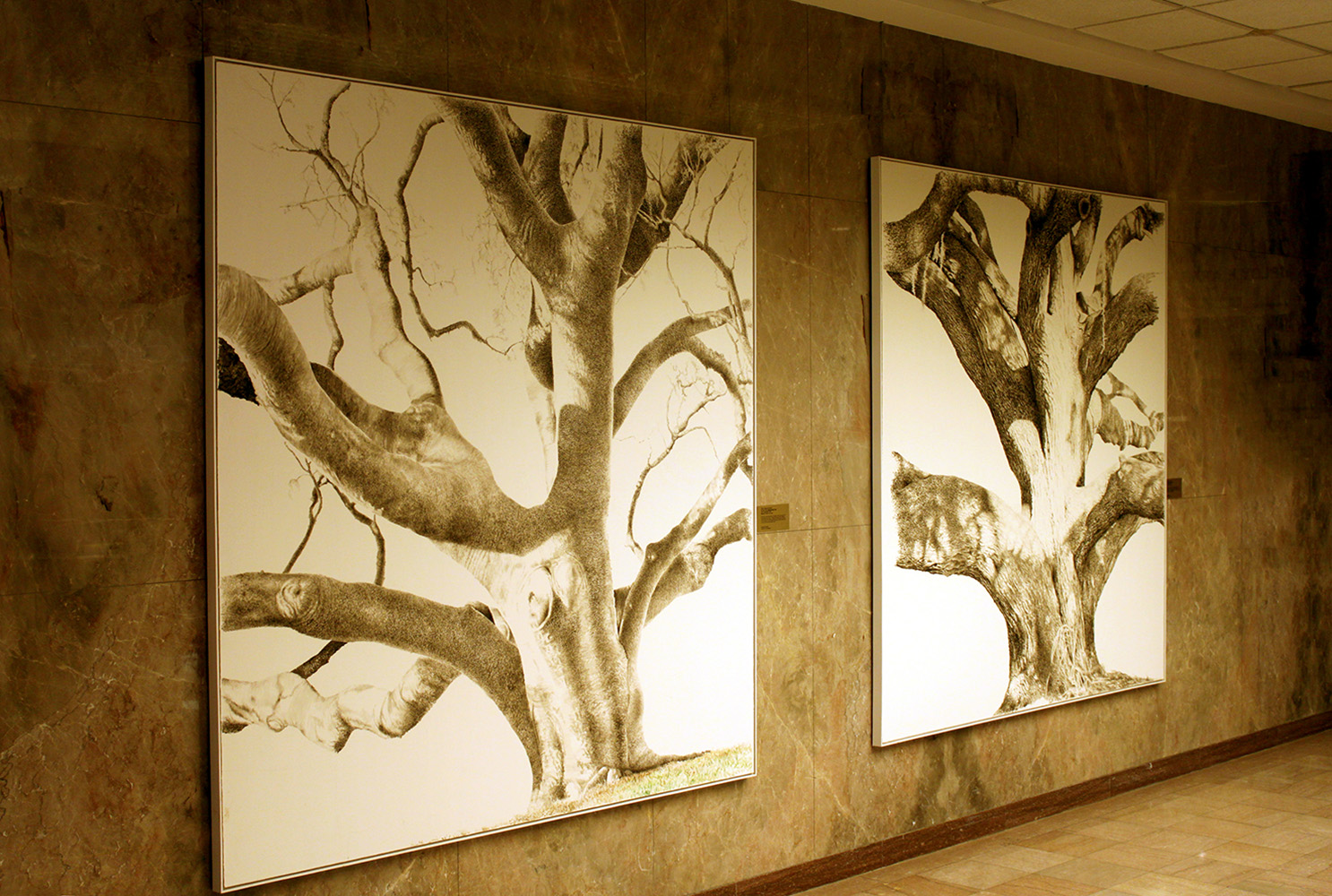 Gumbo Limbo & Safety Harbor Live Oak at Clearwater Courthouse, FL